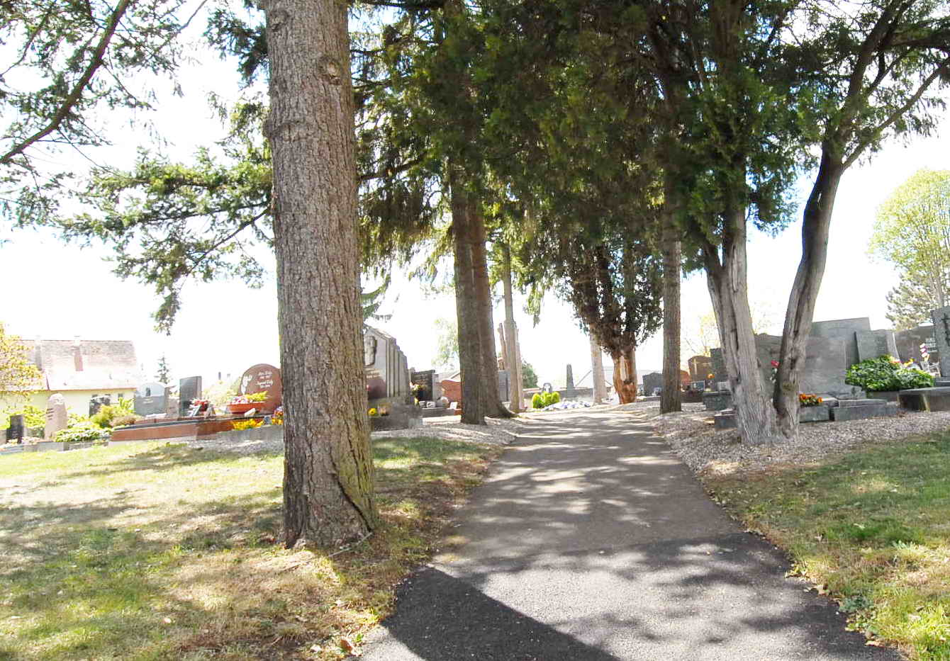 allée bordée d'arbres au cimetiere de Volgelsheim